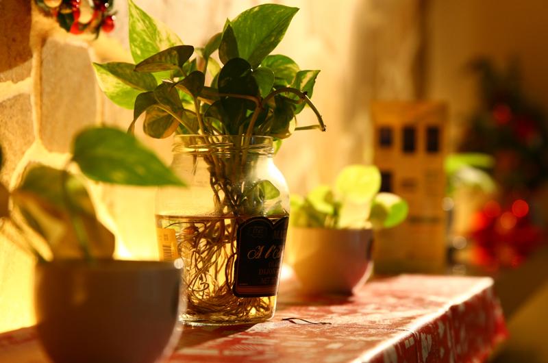 植物は忙しい毎日を癒してくれます