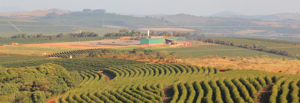 コーヒー産地ブラジル